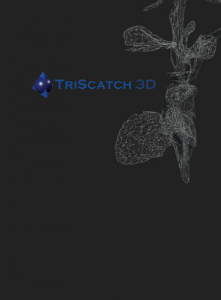 Web_TriScatch_Basic